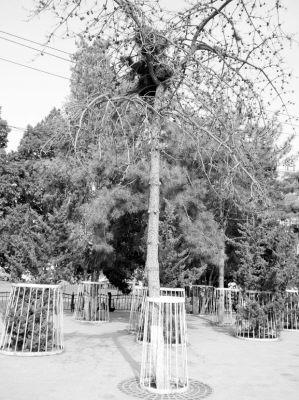 快枯萎的树矢量图