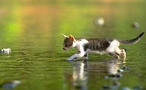 猫可发出超过100个音,狗却只能发10个音