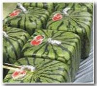 日本有一种正方形的西瓜,为的是方便储藏