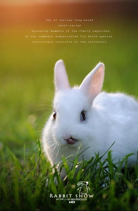 壁纸 动物 兔子 460_699 竖版 竖屏 手机