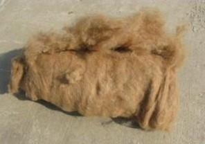 武威特产—驼毛