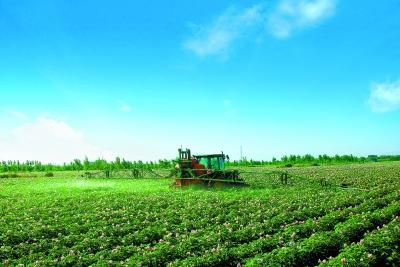 v质量绿色食品提高农产品质量安全粉木耳白沙发M型动态图图片