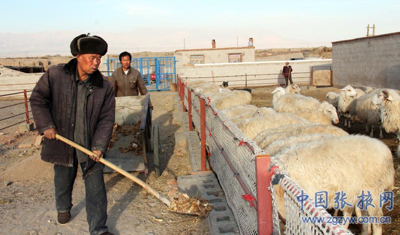 何水/村民何水(左二)在羊舍的运动场喂羊
