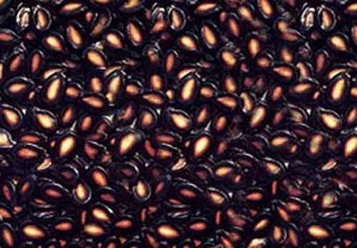 甘肃兰州特产推荐黑瓜子