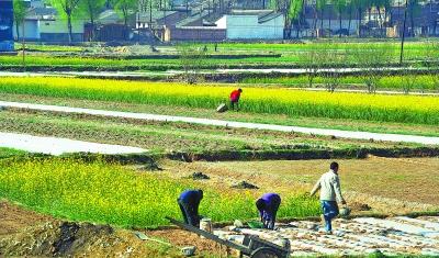 甘谷县磐安镇成为蔬菜生产大镇