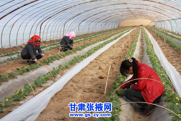 张掖临泽加大农业产业结构调整(图)