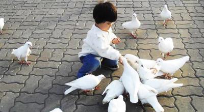 甘肃省卫生厅厅长提醒广场喂鸽子存禽流感感染危险(图)