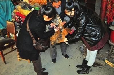 兰州:社区对居民饲养禽类免费集中注射疫苗/图