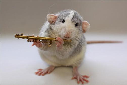 可爱小老鼠__中国甘肃网