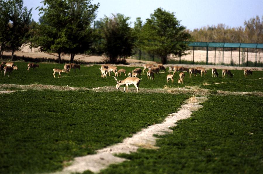 濒危动物的生态乐园---甘肃濒危动物保护中心