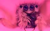 微摄影虫虫世界