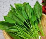 """菠菜大涨价洋葱""""折了腰"""""""