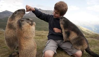 一群土拨鼠与八岁男孩成好友 绕其身边嬉戏