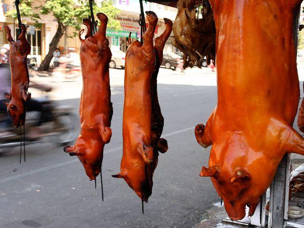 人均吃马肉
