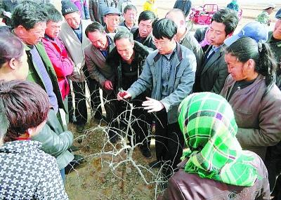 白银靖远县组织农技干部为农民现场传授枸杞种植技术
