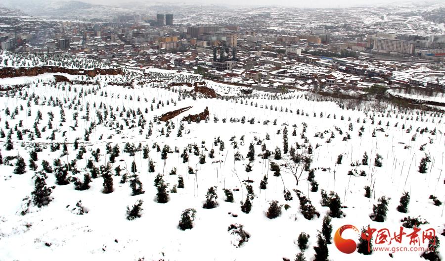 张家川 马小龙/25日上午10时左右,张家川城区雪景。前景为张家川北山新栽植的...