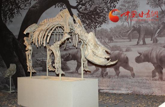 记者走访陇南和政县古动物化石博物馆(组图)