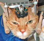 猫研引道德争议