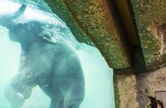 瑞士动物园建巨型水缸围观大象水中生活