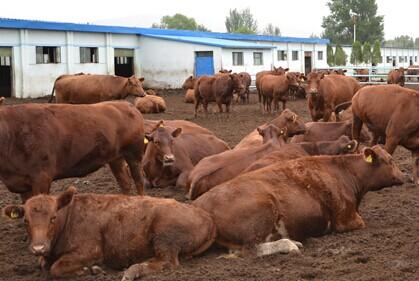 定西加快建设绿色无公害肉蛋奶生产供应基地