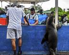 聪明海狮学会买鱼