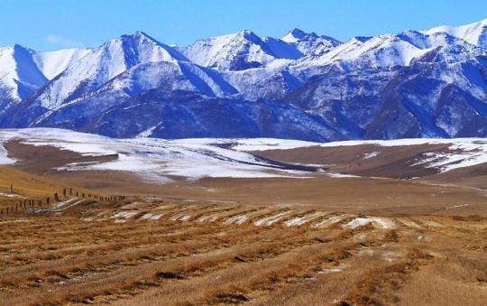 山丹马场十万亩油菜因大雪无法收回