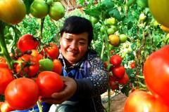 敦煌推进反季蔬菜生产 丰富冬游市场餐桌
