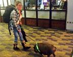 美国女子带猪上飞机 一路与其交谈