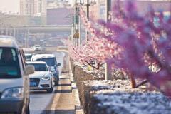"""长春街头树木开花 市民称""""假树一条街"""""""