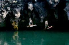 张家界大峡谷现鸳鸯戏水