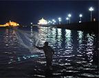 青岛梭鱼扎堆引发捕捞潮