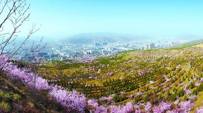 定西通渭县城南北两山松柏吐翠桃花盛开(图)