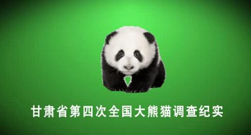 甘肃省第四次全国大熊猫调查纪实