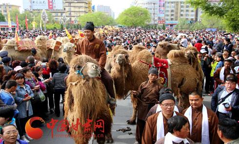 穿越千年丝绸路 茯茶驼队披荆来