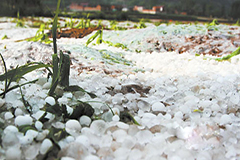 平凉庄浪部分乡镇遭冰雹农作物基本被毁 72607人受灾