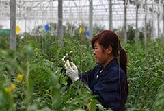 甘肃省将着力提高农药利用率