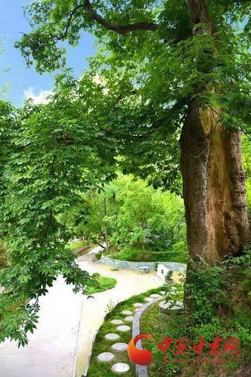每到花开之时,如手掌般的叶子托起宝塔,又像供奉着烛台,也称菩提树.