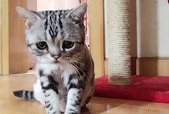 小猫可怜相萌爆
