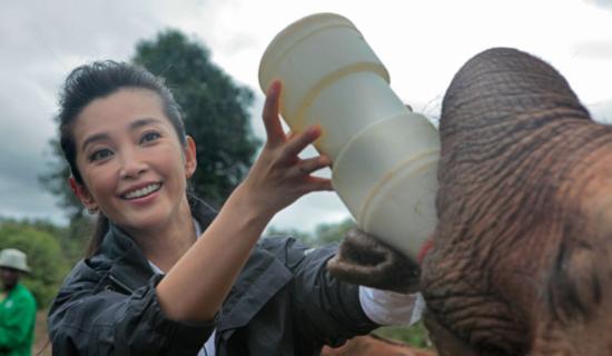 李冰冰喂大象喝水略显老态 提醒网友夏天补水