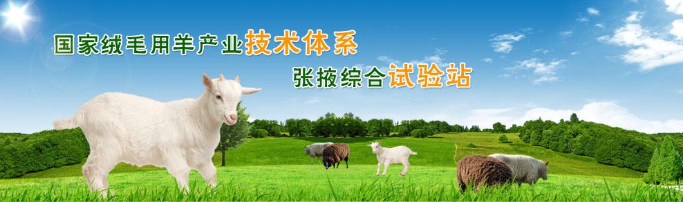 甘肃绵羊繁育技术推广站