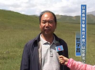 本网专访甘肃省绵羊繁育技术推广站党委书记贺学昌