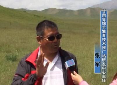 本网专访甘肃省绵羊繁育技术推广站畜产品研发中心主任张军