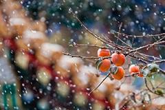 美!紫禁城雪景图