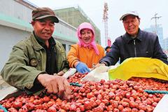 张掖临泽县红枣种植面积达13.2万亩(图)