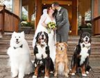 加拿大新娘四只爱犬陪其完婚