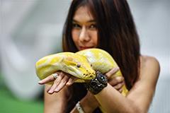 泰国曼谷上演多彩宠物秀