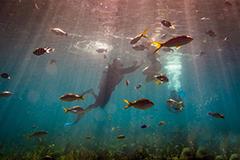"""来古巴,与珊瑚礁和鱼儿""""亲密接触"""""""