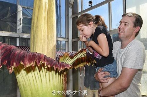 澳大利亚植物园展览尸花 万人争相抢看