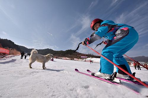 天水麦积山2016年冰雪旅游启动 去麦积滑雪你便是景中之景(组图)