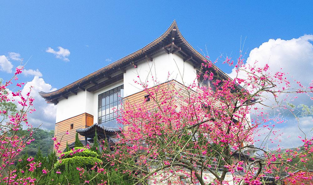 在台湾新北走春赏樱